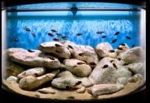 Аквариум с песком
