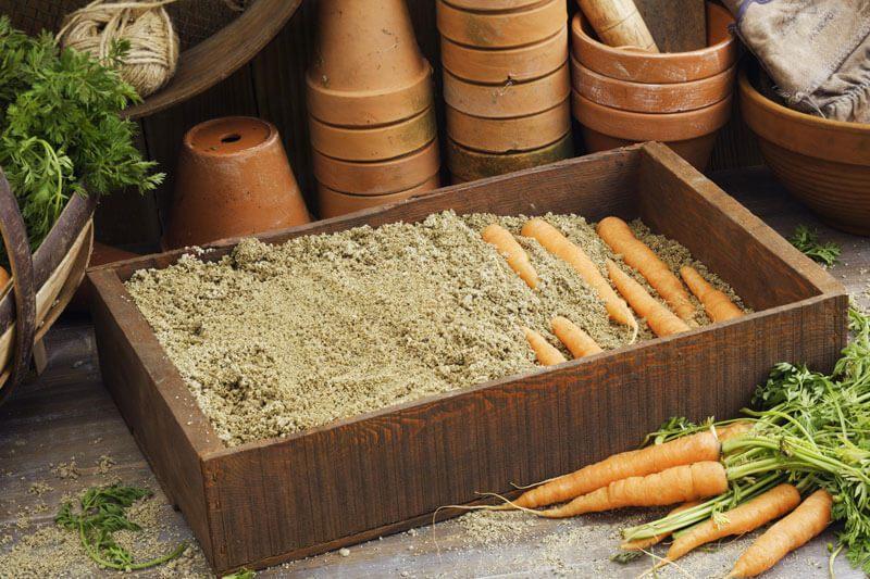Хранение моркови в песке, как продлить жизнь корнеплода до следующего урожая