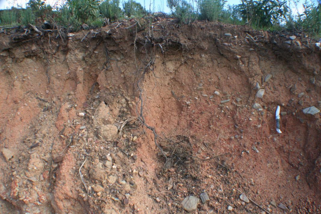 Почва тундры