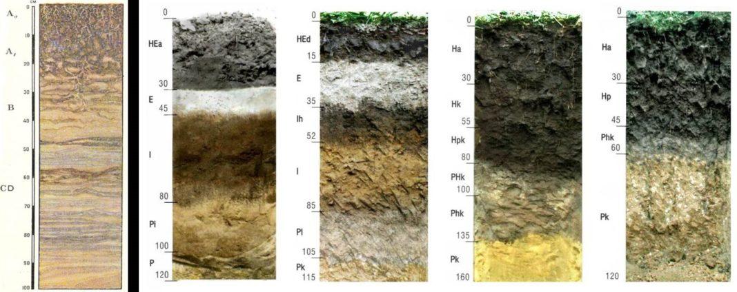 Профиль почвы