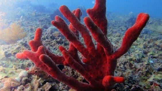 Как выглядят кораллы - фото, описание, основные свойства